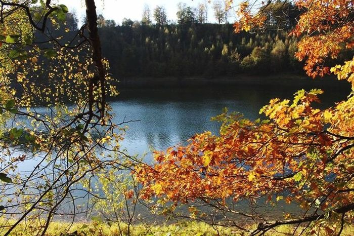 """""""The color of autumn"""" Tree Autumn Lake Nature Water Beauty In Nature No People Tranquil Scene Tranquility Plant Sunset Naturelovers No_society Germanbeauty Lost In Nature Kunstausdruck"""