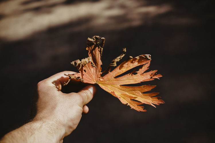 Autumn Botany Close-up Day Dead Plant Dry Focus On Foreground Holding Human Finger Leaf Natural Condition Nature Part Of Person Personal Perspective Uncultivated