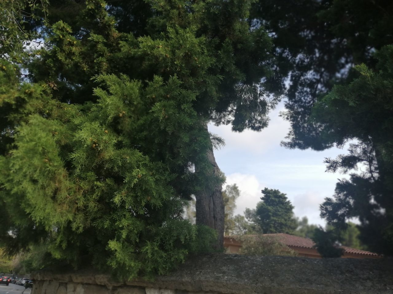 plant, tree, nature, growth, green color, no people, sky, day, outdoors, beauty in nature, tranquility, cloud - sky, land, landscape, tranquil scene, architecture, green, environment, scenics - nature, park
