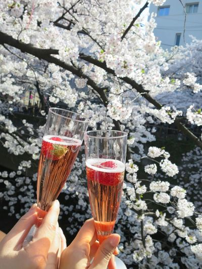 Cherry Blossoms Spring Spring Flowers Sakura Cheers Enjoying Life 桜 Strawberry Tokyo Japan Meguro River Martini Pmg_tok