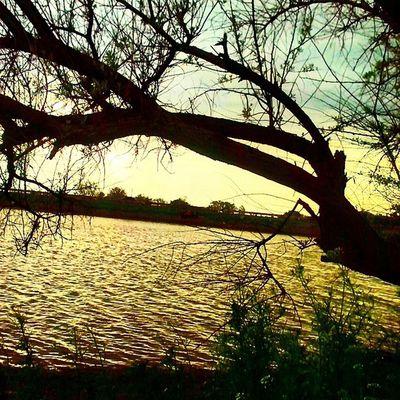 дерево легкий_закат Ставок трава весна Spring Grass Tree Sunset
