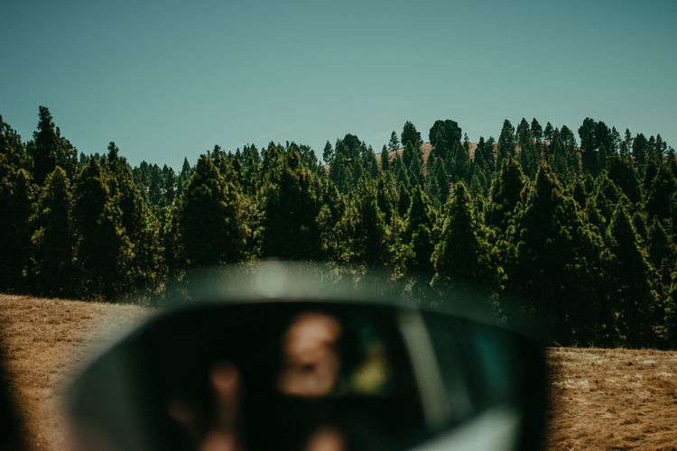 Close-up of car side-view mirror against trees
