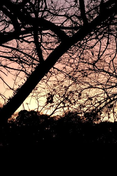 Tree Sunset Silhouettes Peace And Quiet