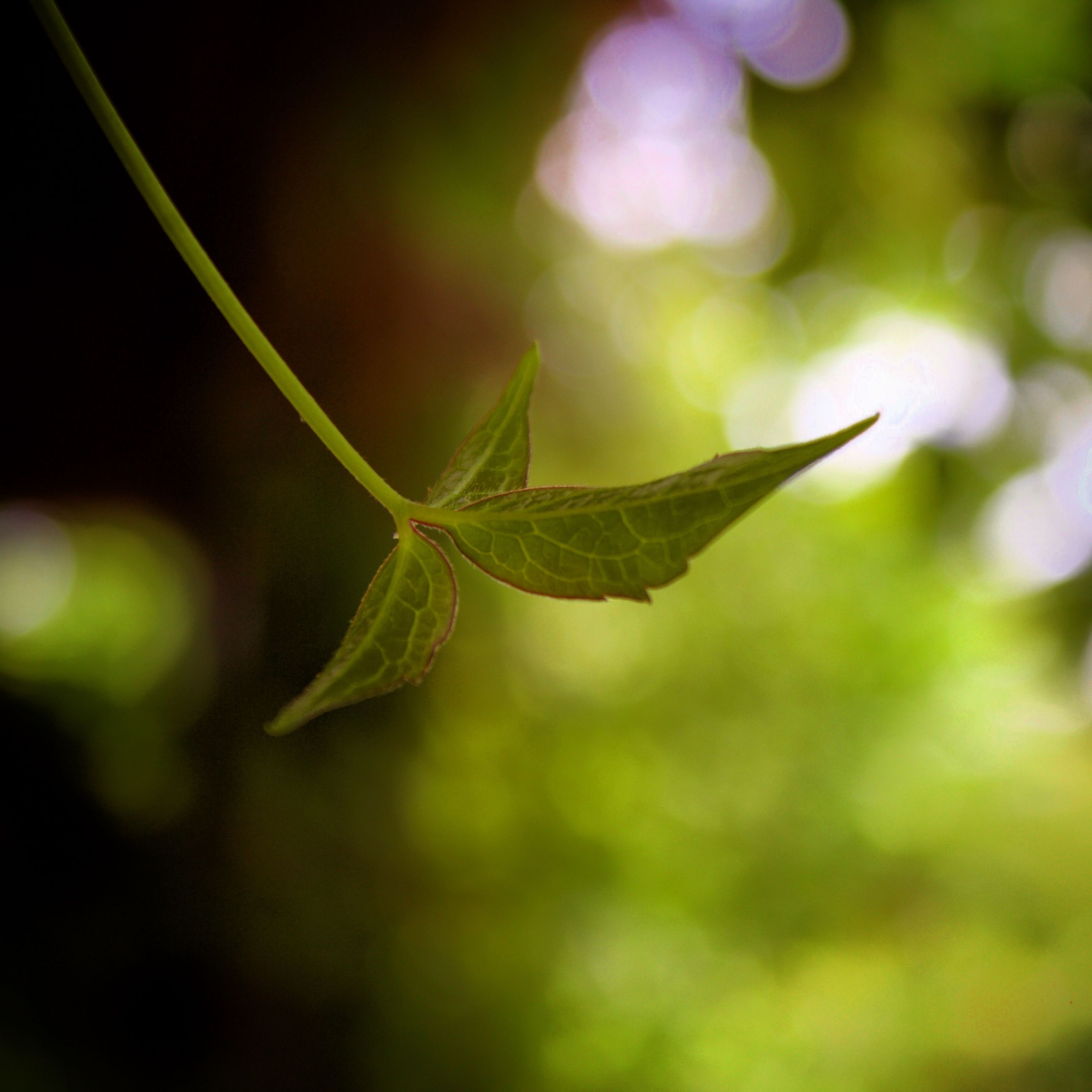 focus on foreground, close-up, growth, leaf, plant, nature, green color, beauty in nature, selective focus, botany, day, outdoors, freshness, fragility, tranquility, springtime, new life, growing, green, scenics, focus, no people
