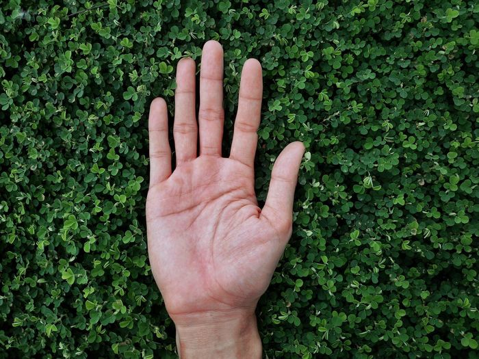I like green color Close-up Green Color Growth Hand Human Body Part Human Hand Nature One Person Plant Real People