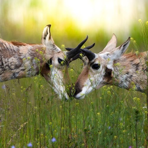 Deer fighting on land in forest