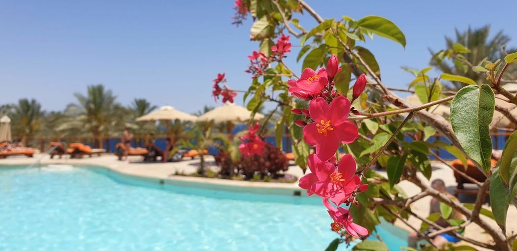 Close-up of flowering plants by swimming pool against sky