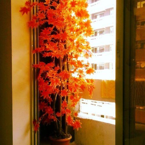 FlameOfTheForest Orange Orangywonderful Plant Soreal Furnishing Sopretty LooksAmazing Brightensuptheroom Plants Decor Orangeforachange Different Unique Worthit Amazing Homedecor Hometown Loveit Artificialplants LiveLong Alwaysyoung