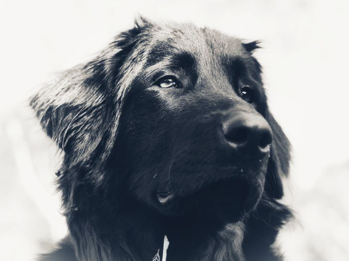 Close-up portrait of dog looking away