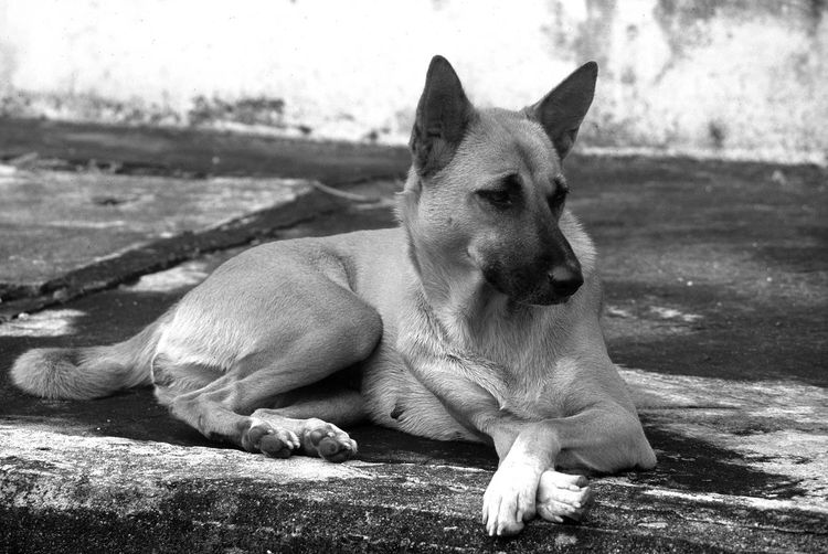 Stray dog in Thailand relaxing beside a road Abandoned Alert Animal Bangkok Black And White Dog Mixed Breed Mongrel Pet Relaxed Roadside Stray Stray Dog Street Dog Streetside Thailand