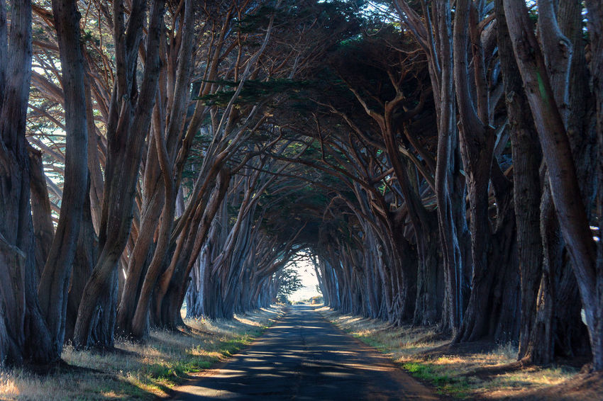 Nature Perspective Point Reyes National Seashore Trees Creepy Cypress Tree Tunnel Cypress Trees  Tree Tunnel Tunnel