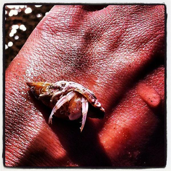 Hermitcrab Lovethisplace