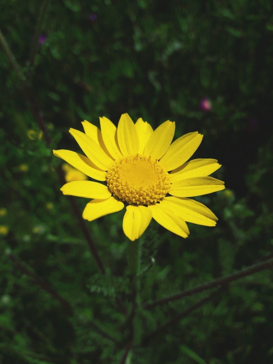 flower, yellow, beauty in nature, fragility, nature, petal, growth, freshness, flower head, plant, blooming, pollen, outdoors, no people, insect, close-up, animal themes, day, pollination