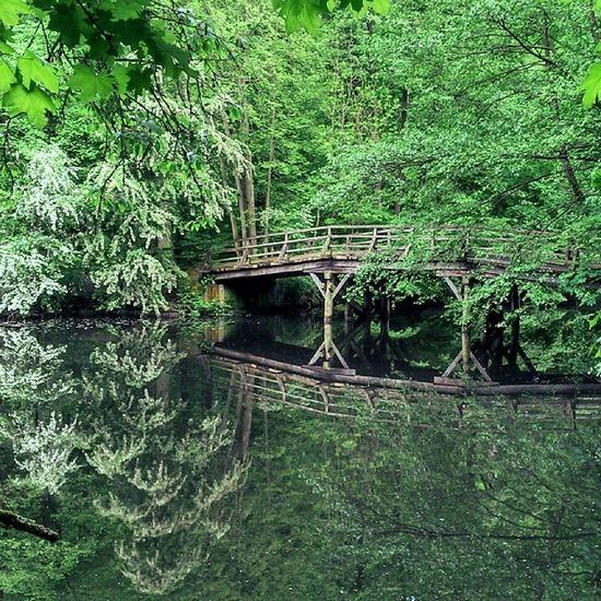 Frankfurt Deutschland Brücke Bridge wald stadtwald forest frühling spring greencity