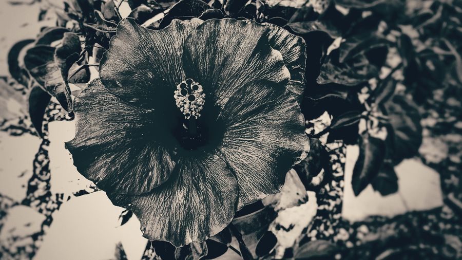 Black And White Photography Blach&white Close-up No People Outdoors Day Nature Tree EyeEmNewHere