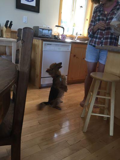 Iggy does his meerkat imitation Dogs Meetkats