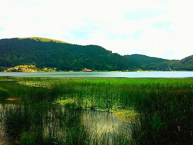 Turkey Abant Abantgölü Nature_collection Nature Photography Green Nature Green Sky And Trees Lake View EyeEm Best Shots - Landscape