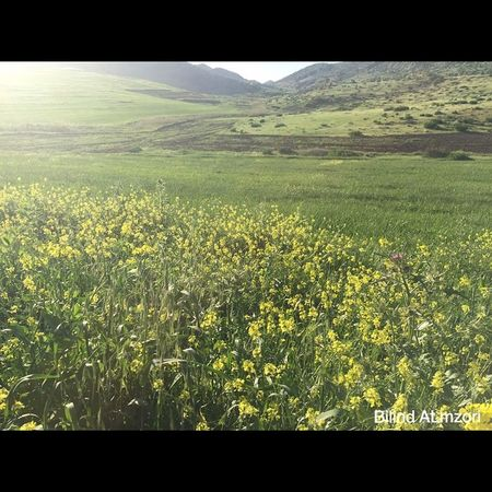 Spîdêbâš Kurdistan Kurd Kêskatî Green Gul Goodmorning Happy Nature IPhon6 IPhone iPhonephotographer Photographer