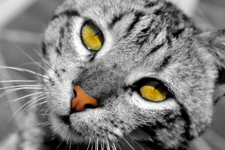 Pets Corner Animal EyeEm Nature Lover Cats Cat Eyes