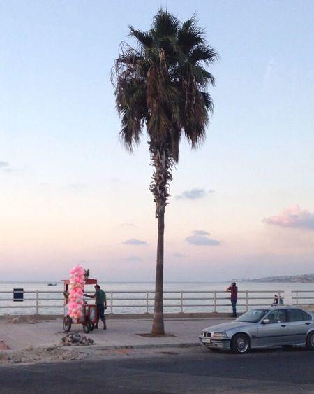 The good days. Palm Tree Beirut Libanon Streetphotography Miles Away
