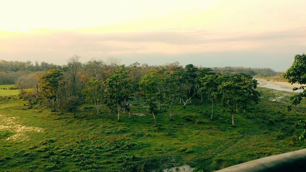 Nature Tree Sunset Beauty In Nature Forest Gorumara National Park Growth Grass Tranquility Plant Sky Green Color No People Cloud - Sky Landscape Outdoors Dooars Dooars__trip India Indiapictures Indian Forest Lataguri
