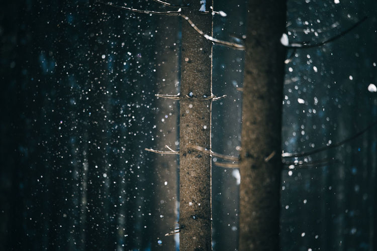No People Nature Close-up Day Winter Focus On Foreground Cold Temperature Snow Glass - Material Wet Outdoors Water Transparent Drop Snowing Window Tree Sunlight Rain Rainy Season Wood Tree Snowflake Light And Shadow Tree Trunk