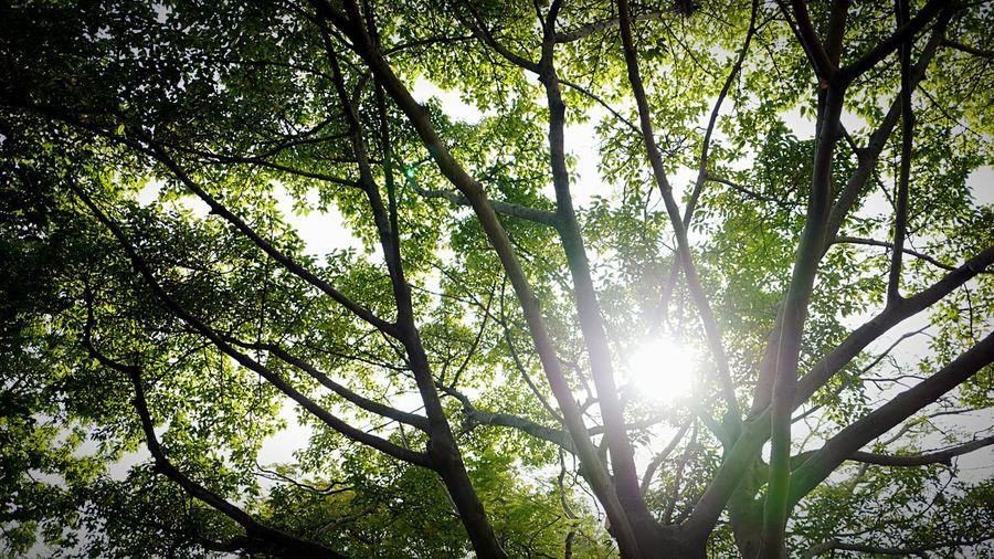 afternoon green HongKong Discoverhongkong Leica Leicaq Green Wood Forest Afternoon Eye4photography  EyeEm Gallery EyeEmbestshots EyeEmBestPics EyeEm Nature Lover