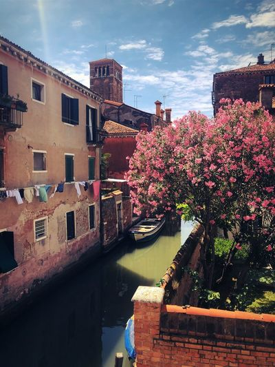 Pink flowering plants by canal amidst buildings against sky