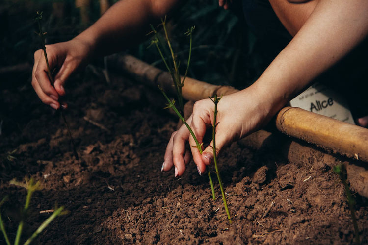 Human Hand Hand Real People Human Body Part Holding One Person Nature Growth Plant Dirt Focus On Foreground Lifestyles Finger Human Finger Day Leaf Plant Part Close-up Gardening Planting Farmer