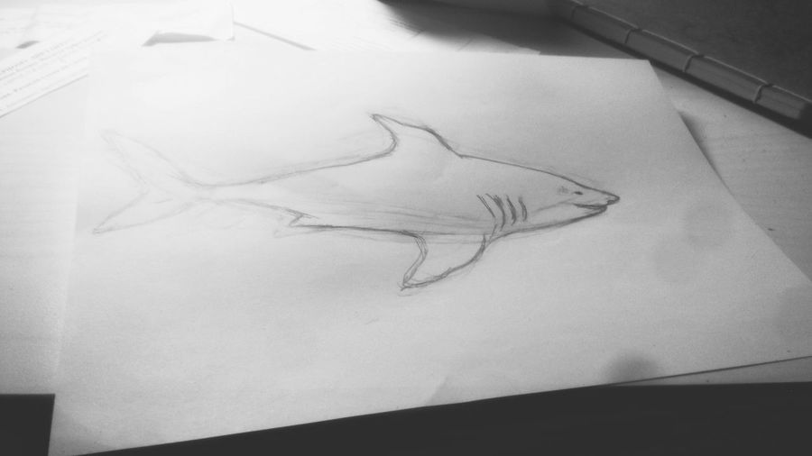 Shark pictures))