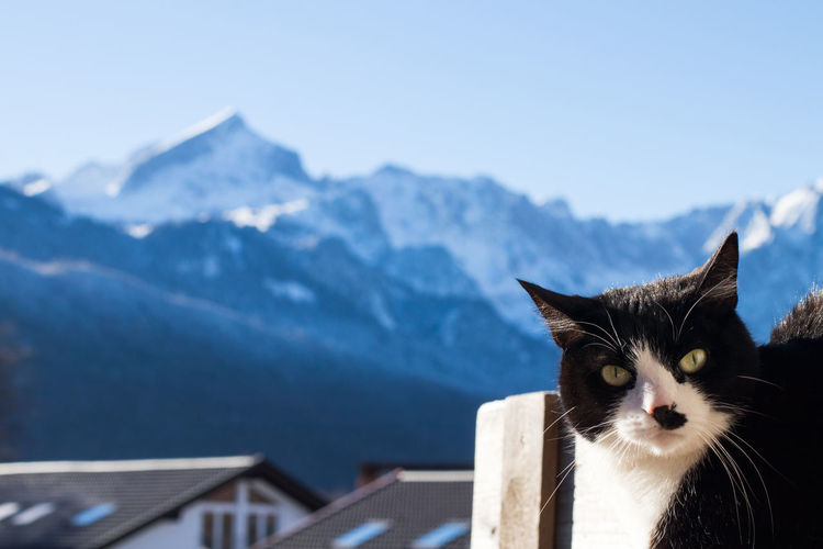 Cat standing on snow covered mountain against sky