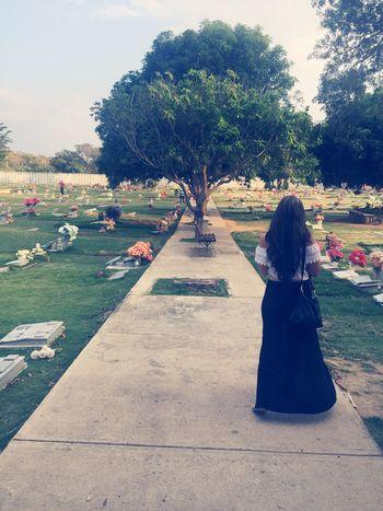 Cementerio árbol Muerte Vida