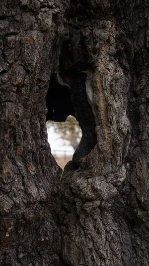 2041 Bark Tree