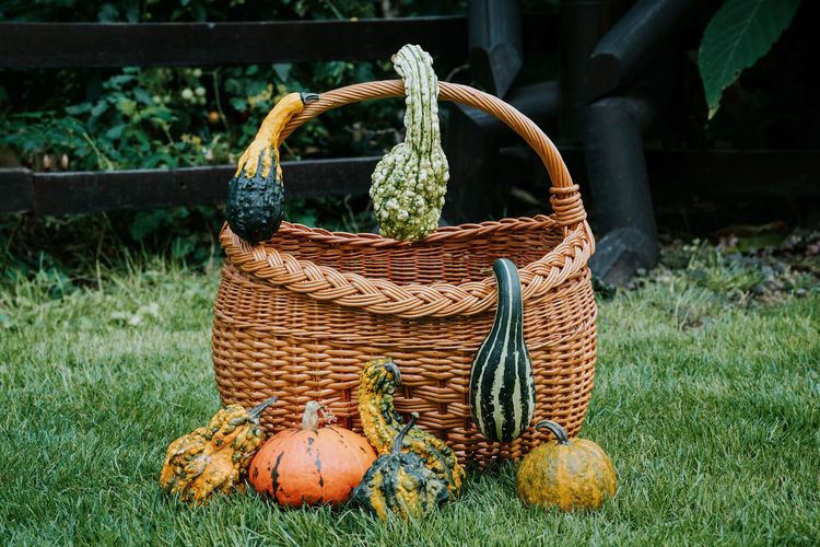 Pumpkins With Basket On Grassy Field