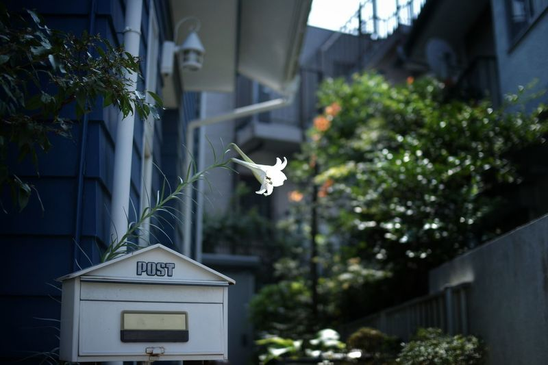 View of mailbox with flower