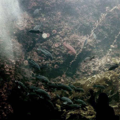 Tokyo Sea Life Test Sealifeaquarium