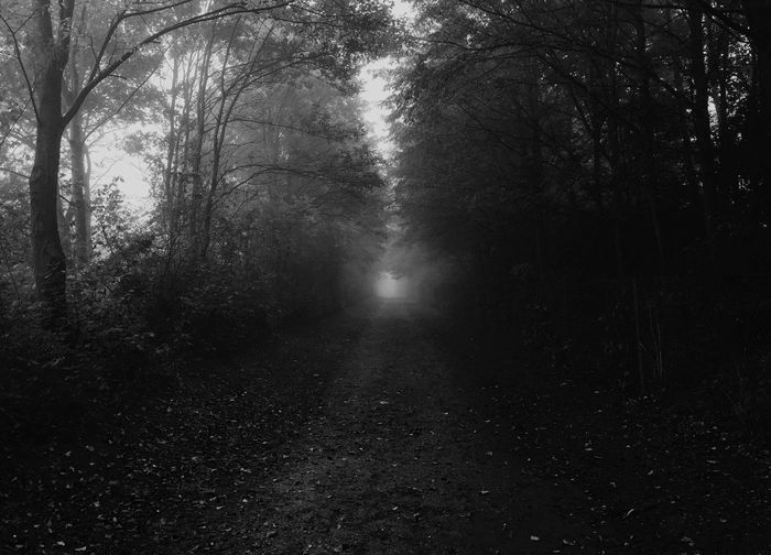 There's always Light And Shadow in our lives Looking Into The Future Endlessness Monochrome Foggy Morning Beautiful Nature Blackandwhite Darkness And Light Fall Beauty Eye4photography  IPS2015Light