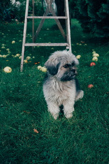 Dog Looking Away While Sitting On Field