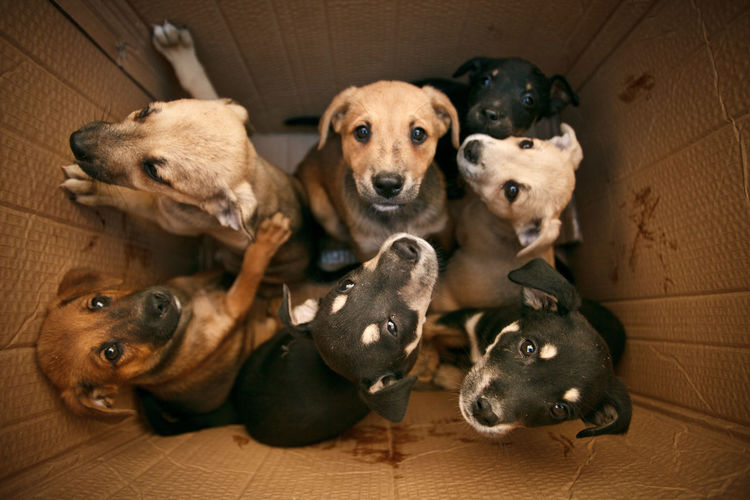 High angle view of dogs in cardboard box