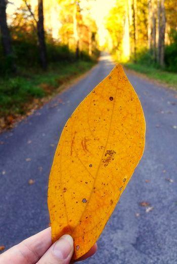 Close-up of hand holding orange leaf on road