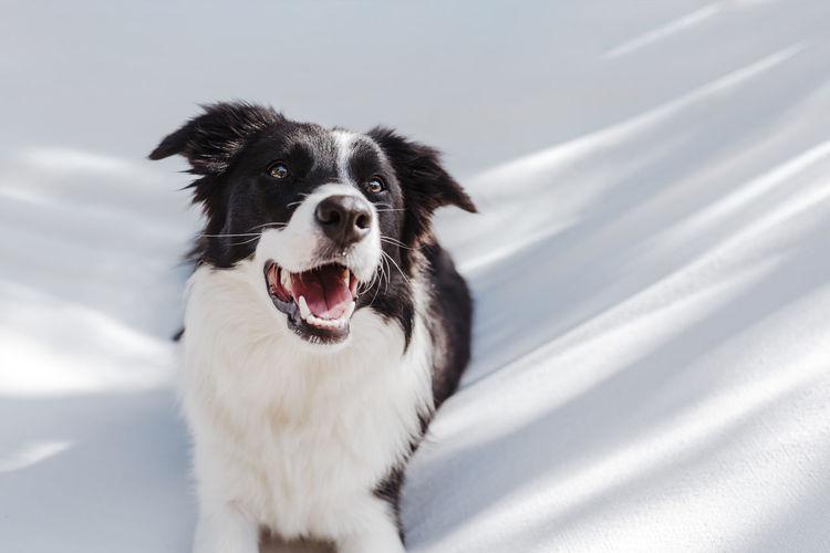 Dog sitting on white textile