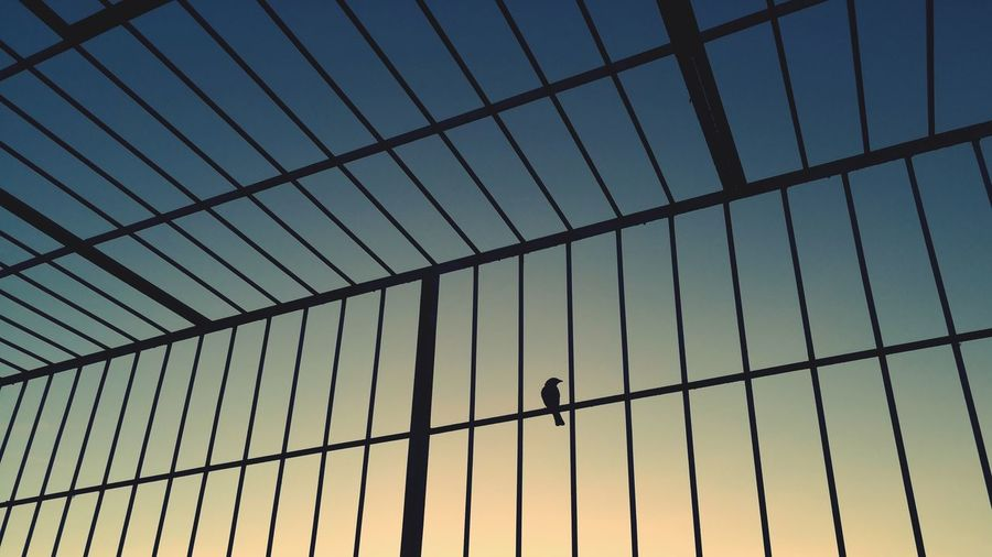 Bird in a cage.