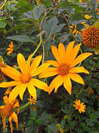 Natureza Perfeita♡♥ Floresnativas Brasil ♥ Flor Estomalina Baixada Santista Coisa De Deus