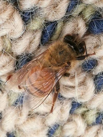 Close-up Indoors  No People Animal Themes Wasp Wasp Bee EyeEm Best Shots EyeEmNewHere Fresh On Eyeem  Bug Portrait Bugslife Beauty In Nature Eyeemnaturelover Indoors  Insect Buzzing Bee