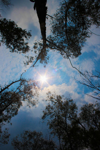 No me quemes Sol Back Lit Beauty In Nature Bright Cloud Cloud - Sky Day Growth Idyllic Lens Flare Low Angle View Nature No People Non-urban Scene Outdoors Outline Scenics Sky Sun Sunbeam Sunlight Sunny Tranquil Scene Tranquility Tree Tree Trunk