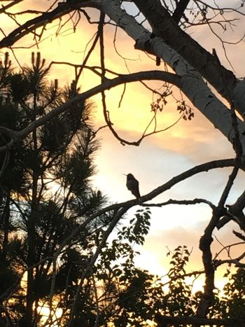 Bird Sunset Tree Branch Silhouette Beauty In Nature Outdoors Scenics