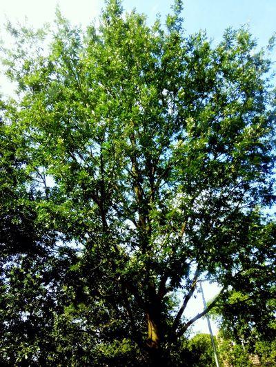 ... More Like Natuur Green