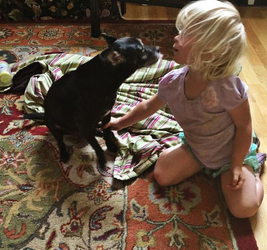 Child Cute Dog Blond Hair Blonde Girl Indoors  Fun Playful Cute Girl With Cute Dog Doggie Kisses Girl Kisses Dog Exceptional Photographs EyeEm Best Shots in Santa Rosa California