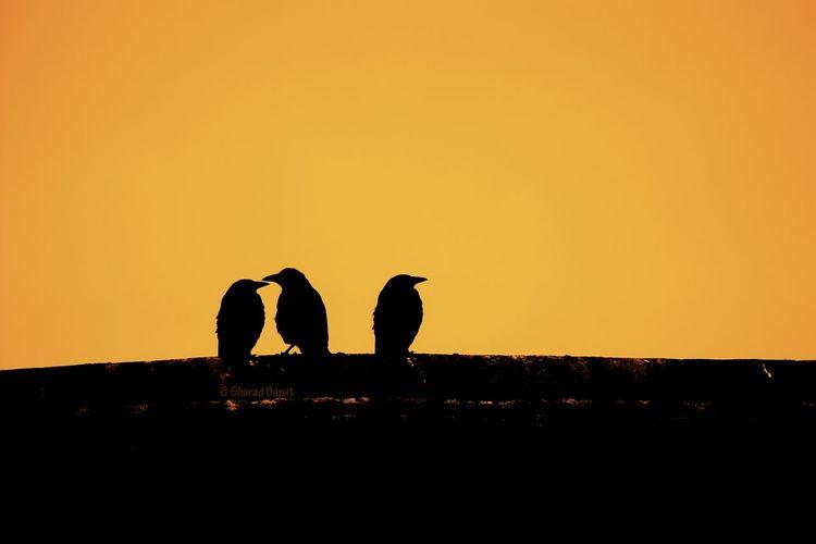 Silhouette of two men against orange sunset sky