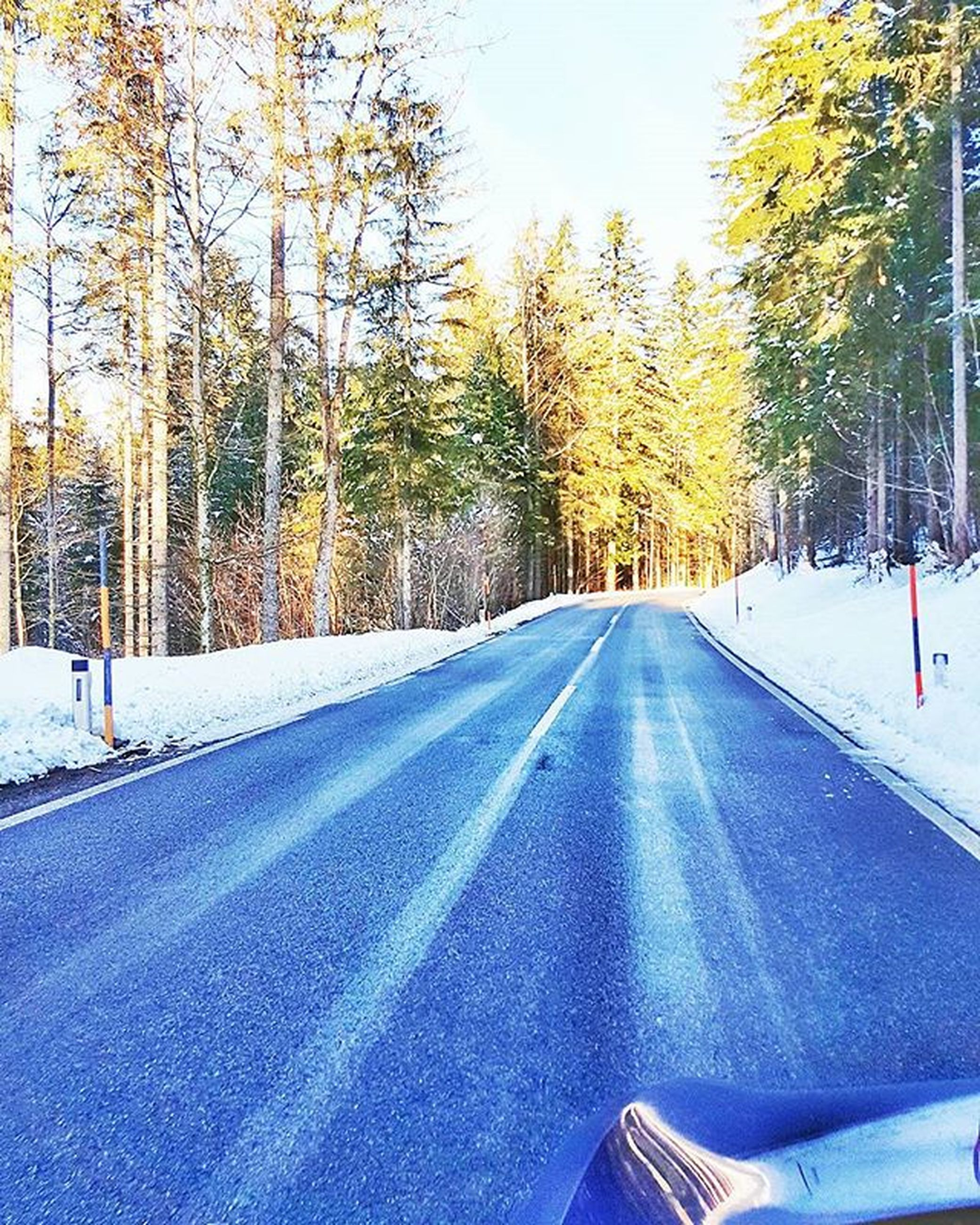 the way forward, tree, transportation, road, diminishing perspective, vanishing point, snow, winter, season, cold temperature, road marking, nature, treelined, tranquility, country road, day, empty road, tranquil scene, street, outdoors